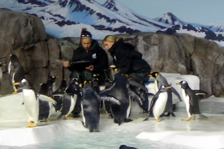 They track how much each penguin eats to know how healthy they are.