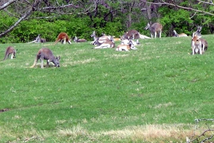 The kangaroos were enjoying the sun.