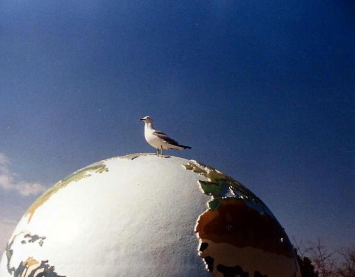 Globe and gull at Toronto Zoo.