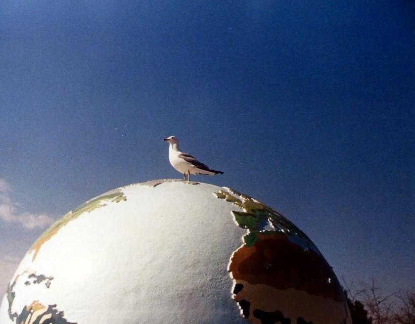 Globe and gull at Toronto Zoo.
